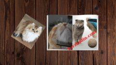 Evde Kedi Tüyü Toplama Yöntemleri
