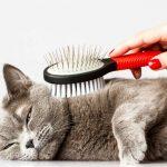 Kedi tüyü toplama tarağı
