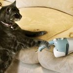 Kedi tüyü toplama yöntemleri